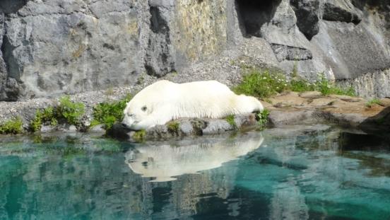 20170724 Zoo Saint Fabien 06