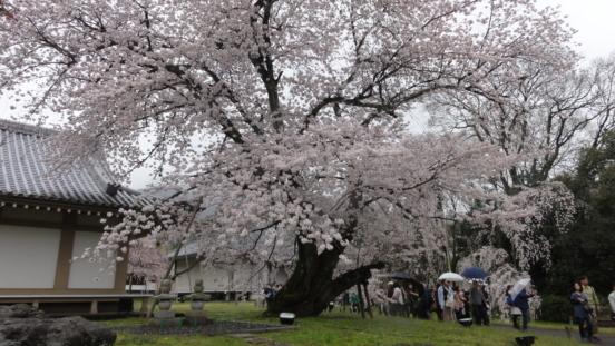 20170408 Daigoji Kyoto 33